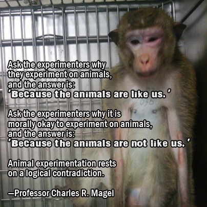 experiment on animal should be stopped The ethics of research involving animals chapter 3 ethical issues raised by animal research ethical issues raised by animal research introduction (agreement that animals involved in a particular experiment experience pain, but disagreement about whether or not causing.