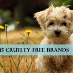15 Makeup Brands that Don't Test on Animals + Alternatives to Animal Testing