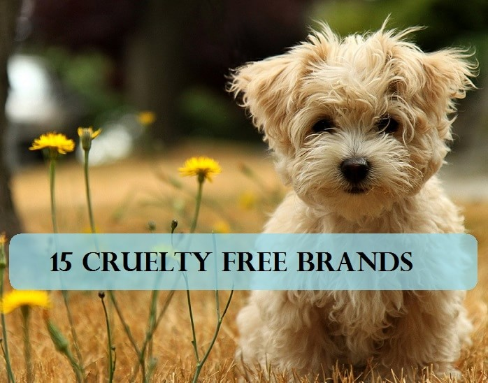 On Animals Alternatives To Animal Testing